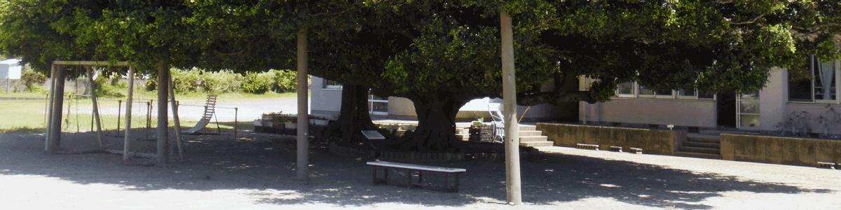 シンボルツリーガジュマル